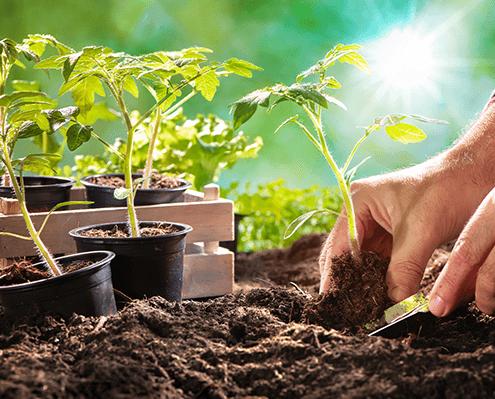 Aufzucht Jungpflanzen und Setzlinge
