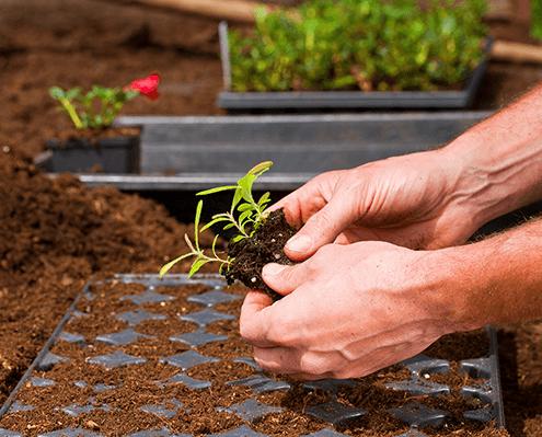 Aufzucht Jungpflanzen in Oer-Erkenschwick