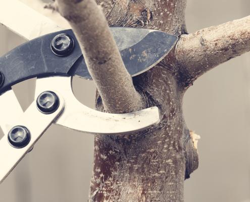 Baumschnitt für die perfekte Gartenpflege