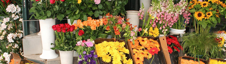 Floristik in Oer-Erkenschwick