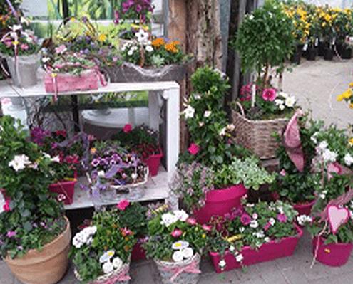 Blumengeschenke und stilvolle bepflanze Blumentöpfe