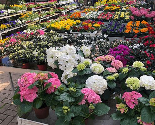 frische Blumen und Pflanzen direkt aus der Gärtnerei