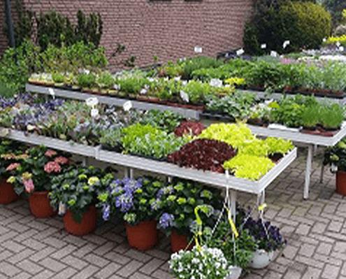 frische Beetpflanzen in Premiumqualität aus der Gärtnerei in Oer-Erkenschwick nahe Datteln