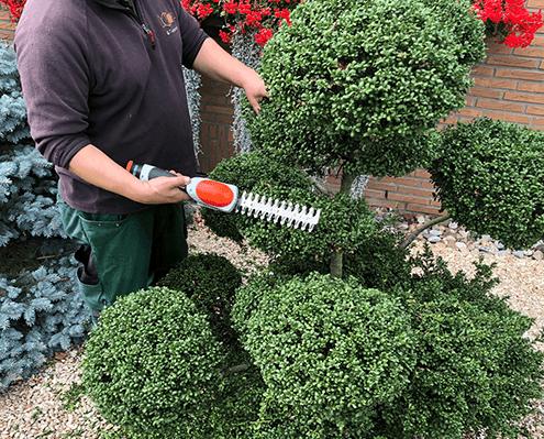 Winterschnitt und Sommerschnitt für die perfekte Gartenpflege