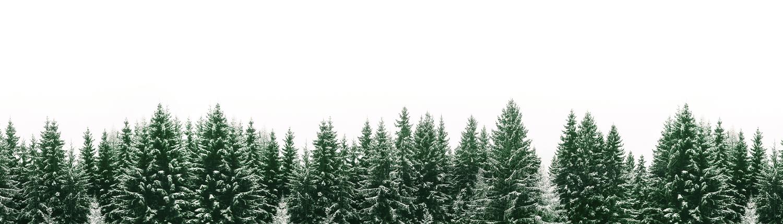 Weihnachtsbaumverkauf Gärtnerei Oer-Erkenschwick