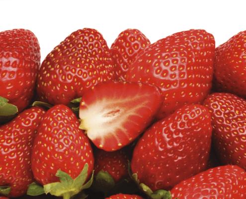 Ansicht frische Erdbeeren direkt vom Feld in Oer-Erkenschwick im Kreis Recklinghausen