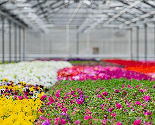 Gewächshaus zur Aufzucht von Jungpflanzen in der Gärtnerei in Oer-Erkenschwick