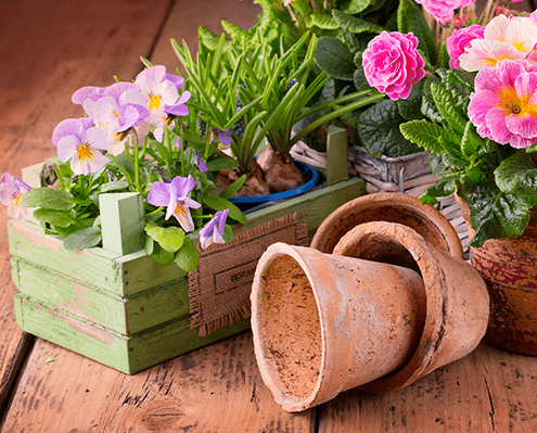 Saisonbepflanzung Blumen Gärtnerei Oer-Erkenschwick