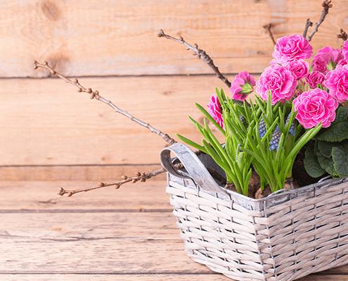 Frühling Saisonbepflanzung Blumen Gärtnerei Oer-Erkenschwick