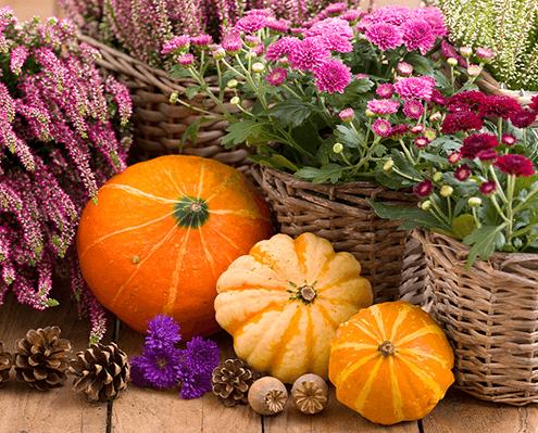 Saisonbepflanzung Herbstblumen und Kürbisse Gärtnerei Oer-Erkenschwick